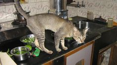 In kitchen.......