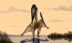 Discovery of new Cretaceous Pterosaur Announced