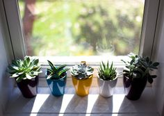 Indoor Cactus Plants | Recent Photos The Commons Getty Collection Galleries World Map App ...