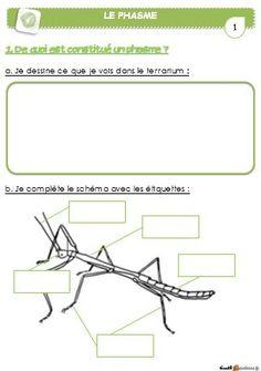 DDM - élevage de phasmes - Le petit cartable de Sanleane Montessori Classroom, Classroom Ideas, Ap Biology, Science Lessons, Teaching, Aide, Recherche Google, French, Insects