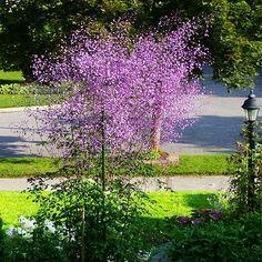Creepers, Beautiful Birds, Shrubs, Vineyard, Flowers, Plants, Outdoor, Data, Gardens