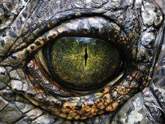 reptile eyes - Поиск в Google