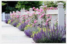 best plants for narrow garden border - Google Search