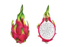 Jasmin Ekström Pitahaya (dragon fruit) drawing