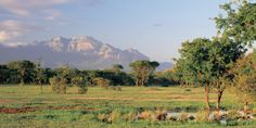 On the Moditlo Private Game Reserve, Vuyani has a prime spot for exploring the African bush. #Jetsetter