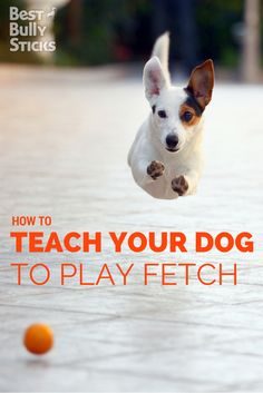 Fetch is great exercise for you and your dog! Learn how on the Best Bully Sticks blog