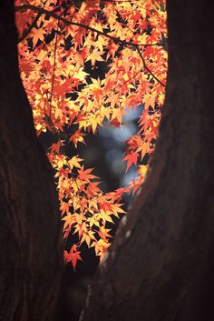 Rikugien Park, Tokyo, Japan - I love the fall!