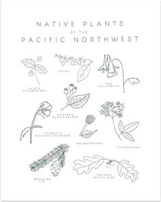 Native Plants of the Pacific Northwest by Taiga Press - Decovo