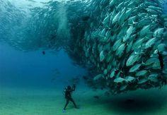 A fun way to photograph fish...