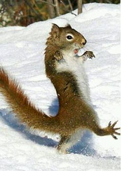 There are lots of squirrel like mammals like the ground hog, gopher as well as prairie dog. When it comes to foods, what do squirrel love to eat? Cute Funny Animals, Funny Animal Pictures, Funny Cute, Cute Pictures, Funny Squirrel Pictures, Funny Animal Humor, Funny Owls, Hilarious Pictures, Funny Humor