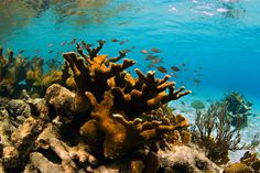 Curacao Surfing- Curacao Surf- Information, Caribbean Travel