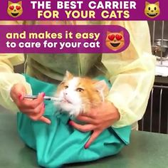I Love Cats, Cute Cats, Funny Cats, Animals For Kids, Animals And Pets, Cute Animals, Cat Carrier, Crazy Cat Lady, Crazy Cats