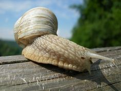 #NEWS #SWD #GREEN2STAY Thankyou (Under 3 Min Video) Poisonous Snail Goo Could Rescue Diabetics