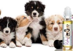 AUSTRALIAN SHEPHERD ANXIETY AND STRESS RELIEF RELAX #DOG…