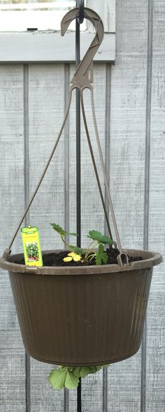 Baby Strawberry Plants into an Upside down Strawberry Plant!! #Strawberry#Season