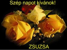 Minden napi jó kivánság - tajcsi.qwqw.hu Beautiful Roses, Minden, Flowers, Plants, Humor, Humour, Funny Photos, Plant, Royal Icing Flowers