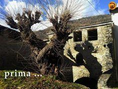 Lezione di Arboricoltura e Valutazione delle condizioni fitosanitarie e strutturali del Gelso monumentale di Ponte in Valtellina (So) a cura di Studio di Arboricoltura di Andrea Pellegatta - Giussano (MB)
