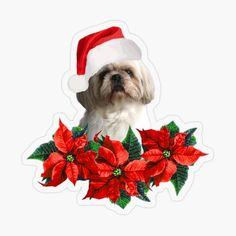 Shih Tzu Hund, Shih Tzu Dog, Poinsettia Flower, Christmas Flowers, Santa Hat, Stickers, Dogs, Designs, Art