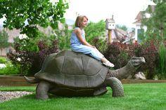 george the tortoise by RandyHand on DeviantArt Roald Dahl Esio Trot, Galapagos Trip, Wolf Sculpture, Giant Tortoise, Garden Globes, Decks And Porches, Tortoises, Garden Statues, Animal Crafts