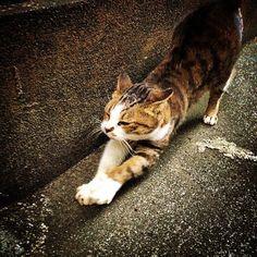 Stretch a kitty.