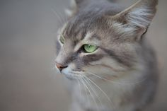 Cat by Nabil Najem on 500px