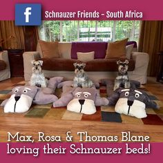 FUN: Does your Schnauzer need a schnauzer schcushion for Christmas? Email Liezel on : liezelirby@gmail.com or whatsapp : 062 178 3703 if you want to order a schcushion! Small : 0.75x0.45m @ R280 Medium: 1x0.60m @ R350 (these are medium) Large: 1.3x0.80m @ R425 Postage not included but can be done or collection in Kempton Park.