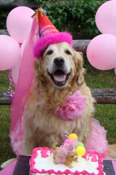 Birthday Wishes For Pet Dog