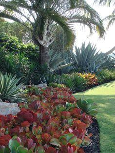 11825137_10207475052545055_956666754821406654_n 720×960 Pixels Outdoor  Cactus Garden, Suculant Garden, Garden Planters