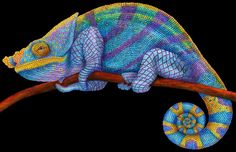 Colored Pencil Drawing Of A Parsons Chameleon Done By Tim Jeffs