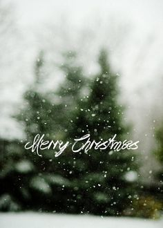 Pura Vida Decor | Merry Christmas message to my Followers, Friends and Family!