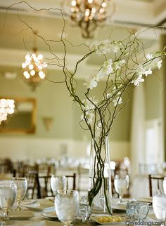 willow branches & white orchid centerpiece