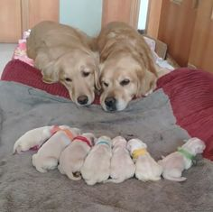 Dogs Family Cute baby dogs and puppies. So adorable.Cute baby dogs and puppies. So adorable. Cute Little Animals, Cute Funny Animals, Funny Dogs, Cute Cats, Funny Puppies, Cute Baby Dogs, Cute Dogs And Puppies, Doggies, Adorable Puppies