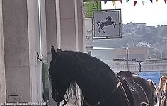 Customer takes his black stallion to branch of Lloyds Black Stallion, Horse Photos, Uk News, Mail Online, Daily Mail, Horses, Pictures Of Horses, Equine Photography, Horse Photography