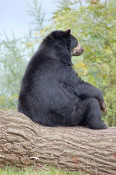 Just Some Bears Thinking About Life