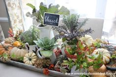 creating an autumn filled tray, seasonal holiday d cor, Heirloom pumpkins both real and faux are arranged around white pitchers planted with ornamental mustard and cabbage plants