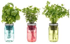 Self-Watering Indoor Kitchen Herb Kit: Very cool little gift for an avid home cook or an apartment dweller without a backyard garden.