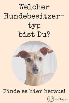 Hunde | Hundebesitzer | Typ
