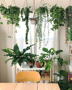 This collection of Hoyas in sunny window is simply perfection. - This collection of Hoyas in sunny window is simply perfection. Her shop Danae - Green Living, Living Room Green, Decor, Room With Plants, Interior, Hanging Plants Indoor, Hanging Plants, Indoor Design, Home Decor