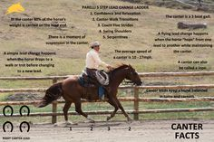 Horse Infographic: A few basic facts everyone should know about the canter! www.parelli.com