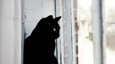 ITAP of my cat looking out the window http://ift.tt/2hR9hvu