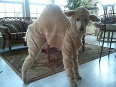 Hump day! I need to dress Precious like this for Halloween!