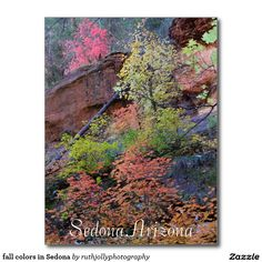 fall colors in Sedona Postcard