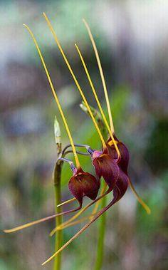 Orquídeas, exótica