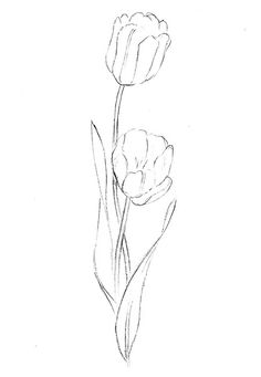 how to draw a tulip pencil