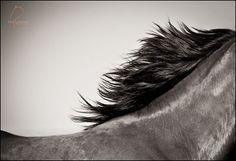 Lisa Cueman Creative Equine Photography