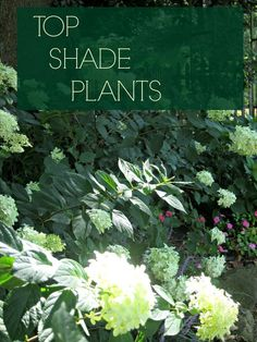 http://www.landscape-design-advice.com/shade-perennials.html The best shade plants for the garden...easy to care for too! Lots of color is created with not only the flowers but the foliage too.