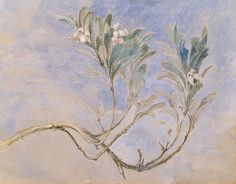 "huariqueje: "" Study of a Sprig of a Myrtle Tree - John Ruskin 1877 British 1819-1900 Pen and watercolor , 14.5 × 20 cm (5.7 × 7.9 in) Berger Collection """