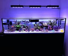 Saltwater Aquarium Fish - Find incredible deals on Saltwater Aquarium Fish and Saltwater Aquarium Fish accessories. Let us show you how to save money on Saltwater Aquarium Fish NOW! Saltwater Aquarium Beginner, Saltwater Aquarium Setup, Coral Reef Aquarium, Aquarium Design, Saltwater Tank, Marine Aquarium, Planted Aquarium, Aquarium Aquascape, Fish Aquariums