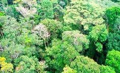 Pregopontocom Tudo: Lei da Biodiversidade é regulamentada