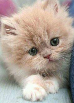 toi un gatito